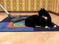 Уборка пылесосом кошачьей шерсти