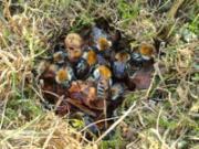 Шмелиное гнездо